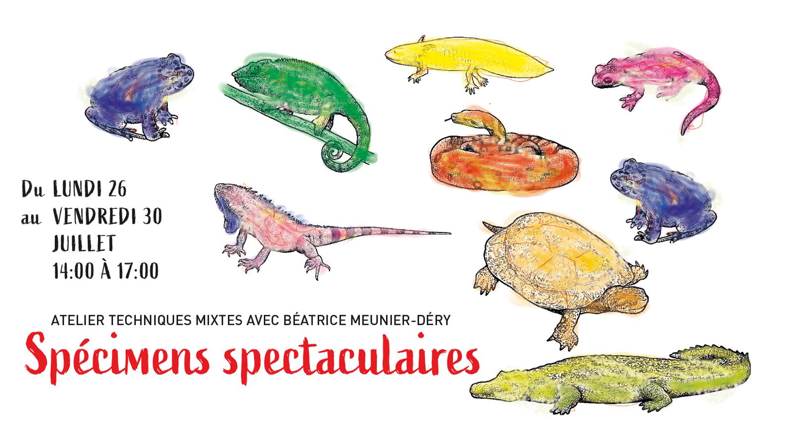 Specimens Spectaculaires